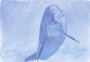 Dolphin 1 - SOLD