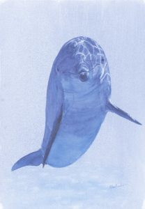 Dolphin 5 - SOLD