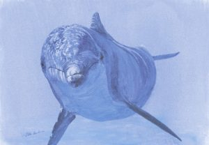 Dolphin 6 - SOLD