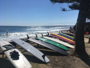 Photograph of surfboards in a row at Moffat Beach